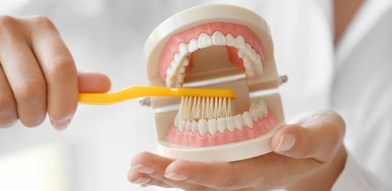 spazzolamento di un modello dentale dimostrativo