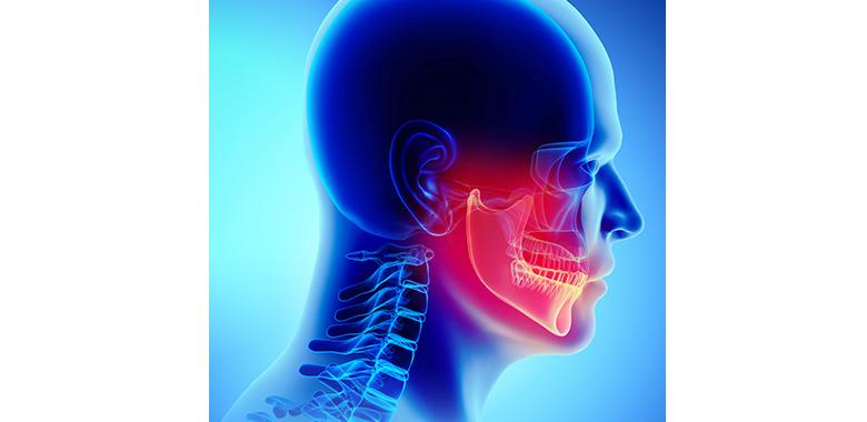 illustrazione medica mascella